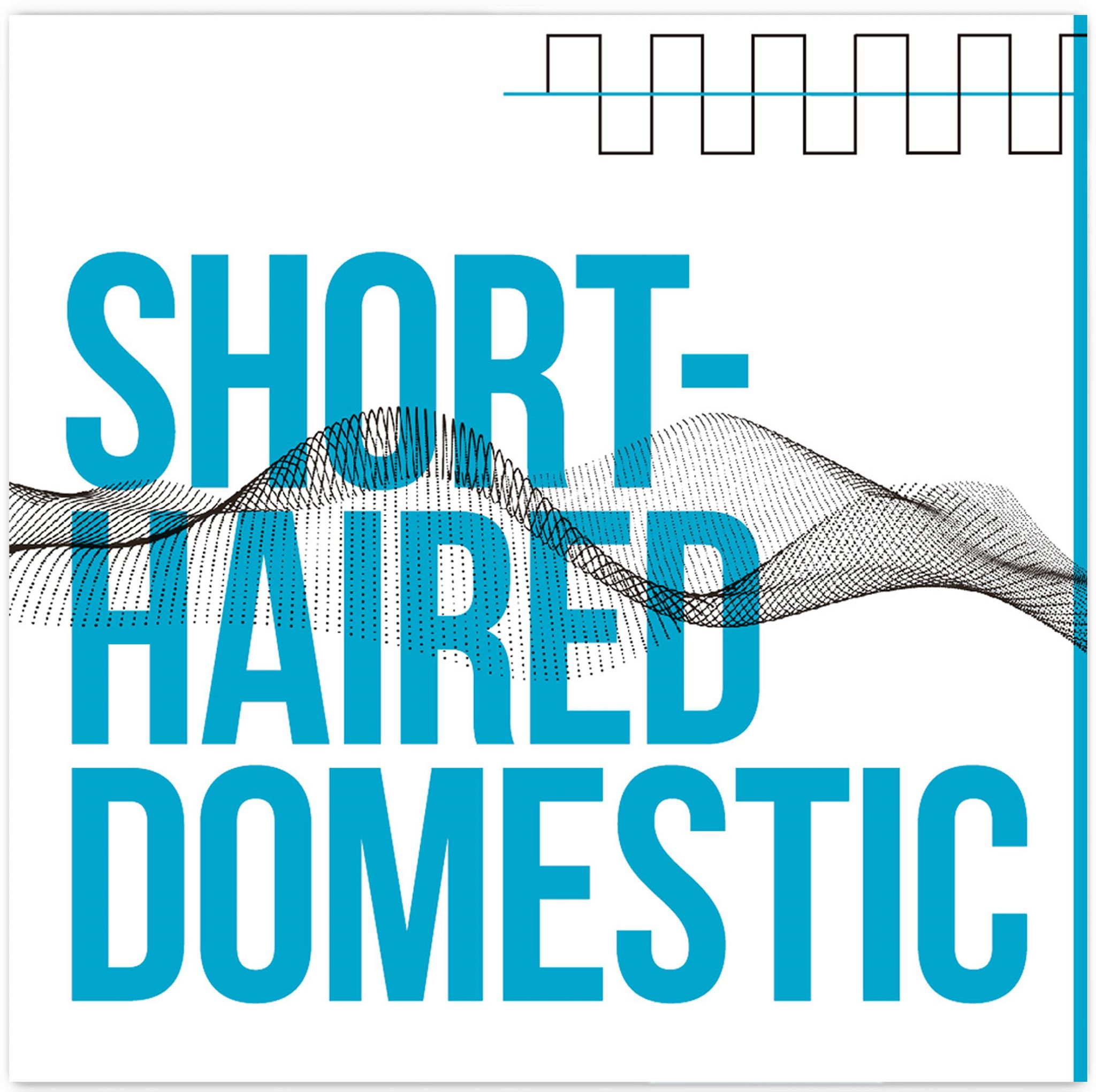 "Stereo Embers' TRACK OF THE DAY: Short-Haired Domestic's ""A song in Latin"""