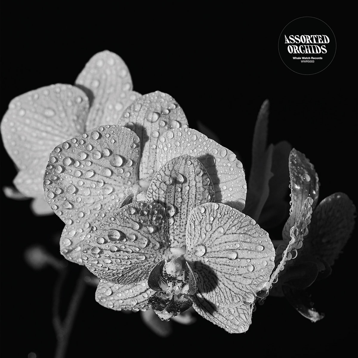STEREO EMBERS EXCLUSIVE ALBUM STREAM – The Extraordinary Self-Titled, Guitar Soli Debut from Assorted Orchids